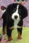 Belinda | Adopted