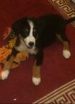 Carlton | Adopted
