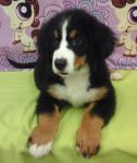 Chloe | Adopted