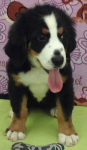 Hazel | Adopted