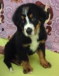 Sooner | Adopted